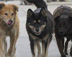 Sokak Köpekleri Adam Parçaladı