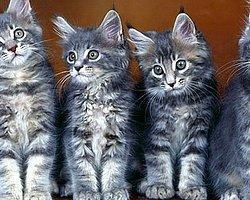 Bugün Dünya Kediler Günü!