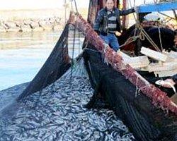 Samsunlu balıkçılar tek ağda 25 ton kefal yakaladı