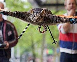 Kedisinden helikopter yaptı