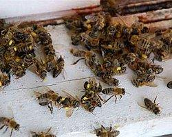 Kraliçe Arı Dönmeyince Mahalleyi Bastılar