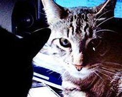 Yapay beyin ilk kediyi tanımladı