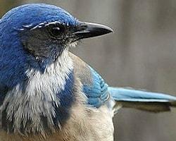 Kuşlar Yas Tutar mı?