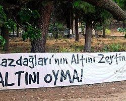 Türkiye'nin Zeytinlik Alanları Artık Koruma Altında Değil!