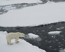 Kuzey Kutbu'nda Rekor Erime