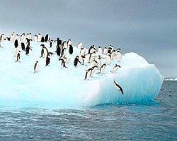 Buzul Erimesi Durdurulamıyor
