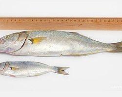 Radikal Balık Timi Kuruldu