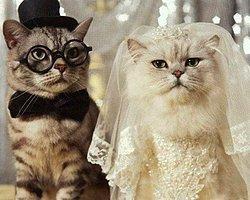 Evlenmek İçin Doğru Koca Mı?