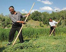 Çiftçiye 9 Milyar Tl Hibe Geliyor
