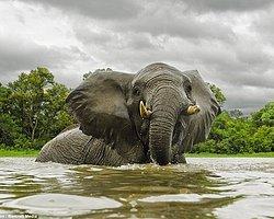 Fillere 'Güneşli' Takip