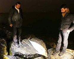 Boğaz'da Esrarengiz Yunus Ölümleri