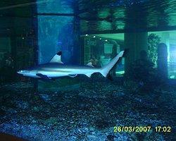 Şangay'da Şok Görüntü; Köpek Balığı Akvaryumu Patladı