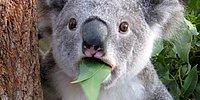 Fena Şok Olan 17 Tatlı Hayvan - GIF Galeri