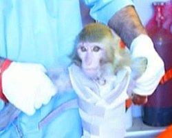 İran Uzaya Maymun Gönderdi