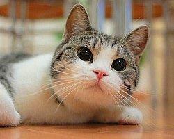 Kedi Kumu Seçerken Nelere Dikkat Etmeli?