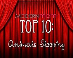 Uykucu Hayvanlar En iyi 10 Listesi