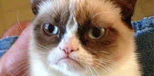 En İyi Kedi Filmlerinden Kaçını İzledin ?