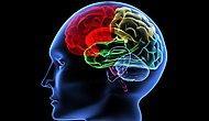 Fare Beyninde Sahte Anı Oluşturuldu