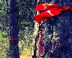 Odtü'deki Ağaç Kıyımına Tepki