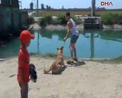 Sokak Köpeğine Zincirli Eziyet!