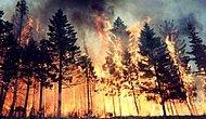 Ormanlar 'Faili Meçhul' Kurbanı