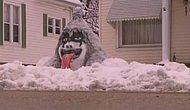 Karlı Günlerin Yıldızı Olmanızı Sağlayacak 25 Sıradışı Kardan Adam Önerisi