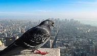 Dünyayı Bir Kuşun Gözlerinden Nasıl Görürdünüz ?