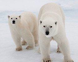 Kuzey Kutbu'nu Kurtar