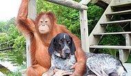 İçinizi Isıtacak 15 Hayvan Dostluğu Hikayesi