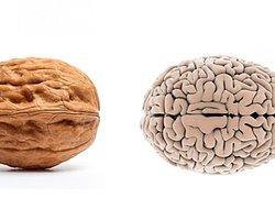 Faydalı Yiyecekler ve Organlarımıza Benzerlikleri