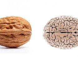 Ceviz – Beyin