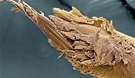 Mikroskop Altında Büyüleyici Görünen 32 Sıradan Şey