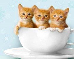 Minik Kediciklerin Bakım Süreci