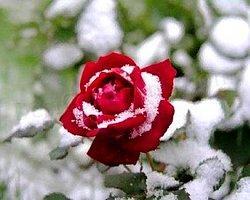 Bitkilerimizi Soğuklardan Nasıl Korumalıyız?