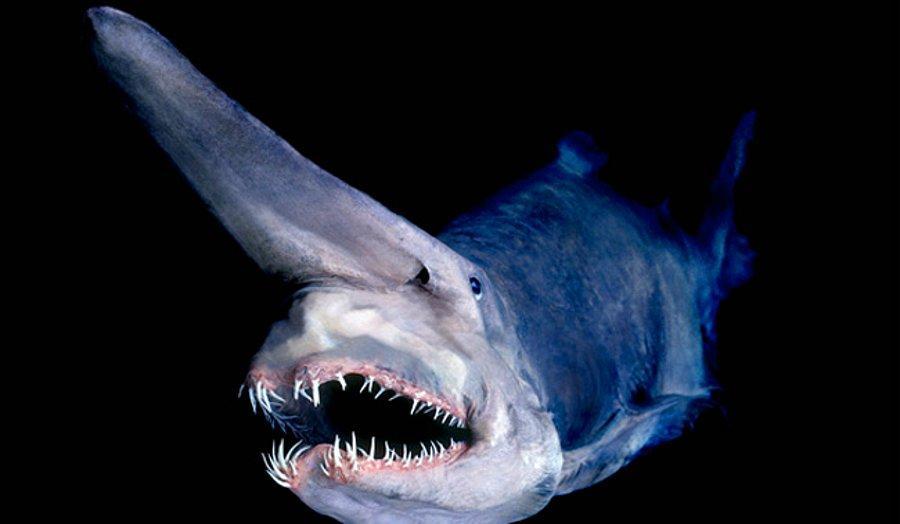 Okyanusun En Derin Yerlerinde Yasayan Fantastik Hayvanlar Onedio Com