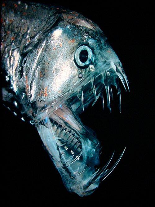 Okyanusun En Derin Yerlerinde Yaşayan Fantastik Hayvanlar Onediocom