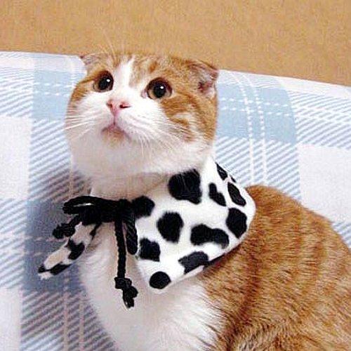 Kış aylarında kedi bakımı konusunda dikkat edilmesi gerekenler