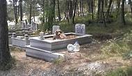 Mezarlıkta İlginç Olay