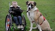 Owen ve Köpeğinin Yürekleri Isıtan Hikayesi