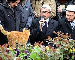 Erbakan'ın Anmasında Kedi Sürprizi