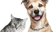 """""""Köpekler Kedileri Kovalar"""" Önermesinin Yanlış Olduğunu İspatlayan 20 Cazgır Kedi GIF'i"""