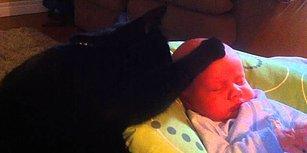 Ağlayan Bebeği Patisiyle Severek Uyutan Kedi