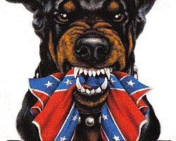 Yasaklara Karşı Gelen 16 İsyankar Köpek