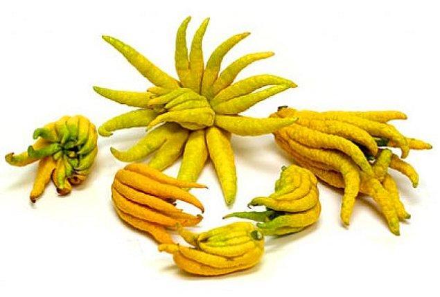 5. Buda'nın Eli Meyvesi
