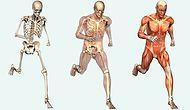 Vücudunuz Hakkında Şaşırtıcı 29 Şey