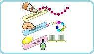 Besin Gruplarının Kan Şekerimize Etkisi