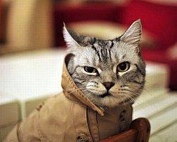 Kedilerin İnsanlığın Sonunu Getirebilecek 17 Gizli Yeteneği
