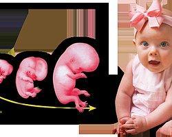 Hamilelikte Hafta Hafta Süreç