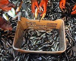 Balıkçılara Av Yasağı 15 Nisan'da Başlıyor