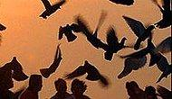 İnsanoğlu Kuş Misali